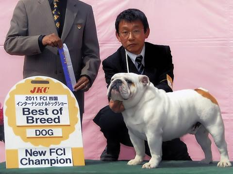 ドッグショー・CH犬情報|ブルド...